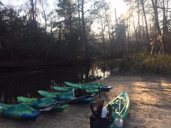 Lacombe, Louisiane : A few of our kayaks ready to launch at Cane Bayou!