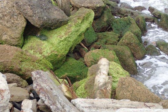 Whanganui - Castlecliff Beach 12