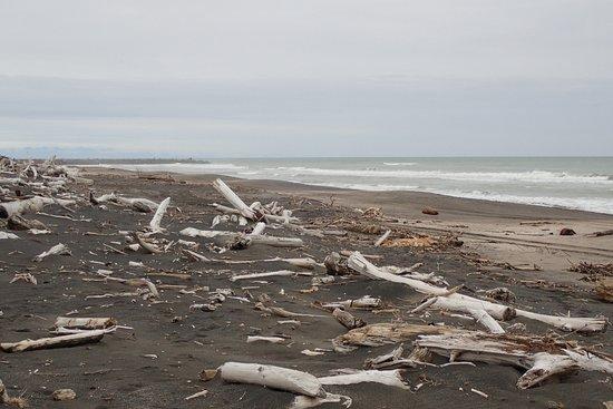 Whanganui - Castlecliff Beach 21