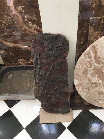 Macro Fossiles Kasbah: photo2.jpg