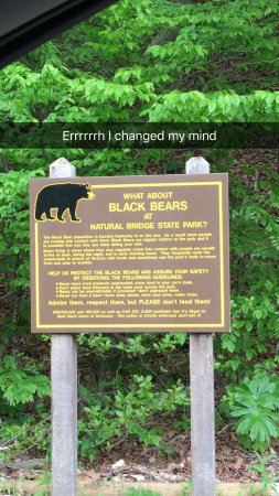 Daniel Boone National Forest: Black Bears, so beware