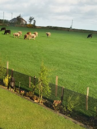 Dinas, UK : view from twin room