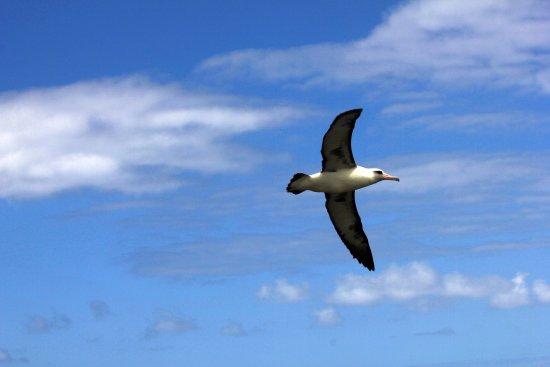 Kilauea, HI: Bird