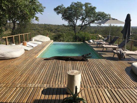Timbavati Private Nature Reserve, Sør-Afrika: photo5.jpg