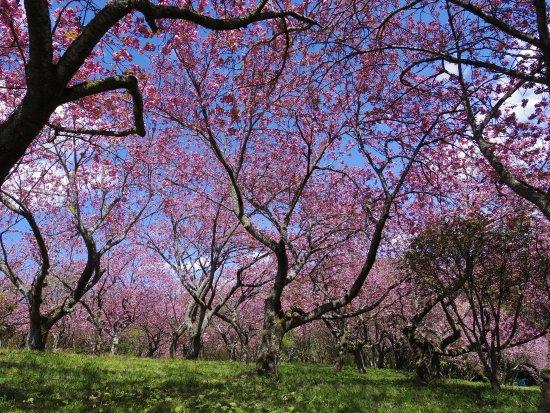 Shizumine Furusato Park