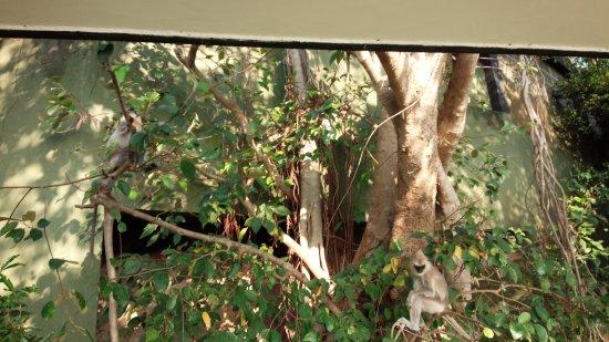 Heritance Kandalama: DSC_2294_large.jpg