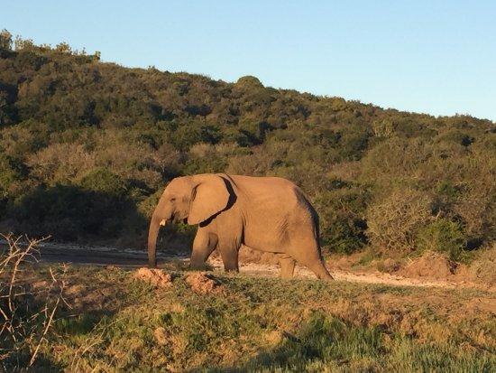 Kenton-on-Sea, Sudáfrica: photo6.jpg