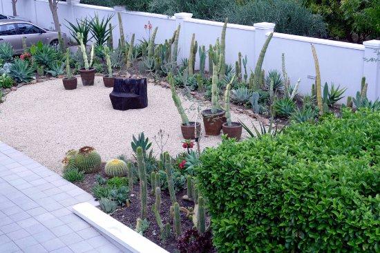 Robertson, جنوب أفريقيا: Cactus garden