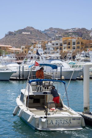 Picture of pisces sportfishing cabo san for Cabo san lucas fishing season