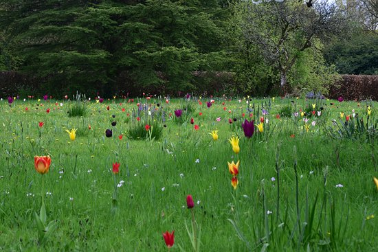 Cothay Manor: Stunning Meadow