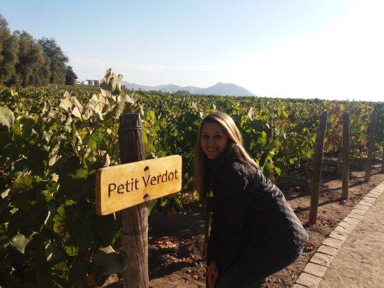 Concha y Toro Winery: Degustação de uvas