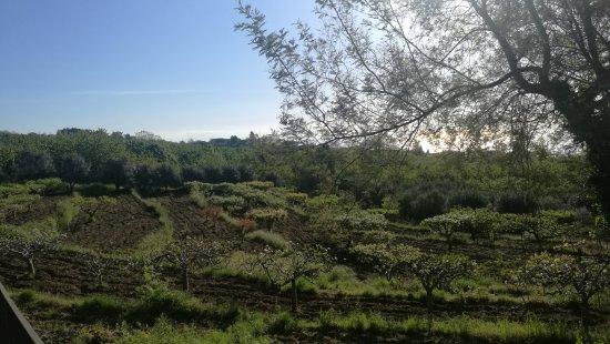 Sant'Alfio, Italia: IMG_20170501_075054_large.jpg
