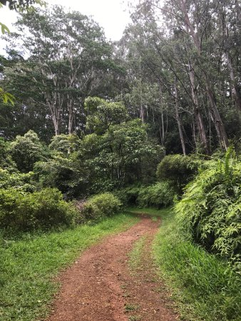 Kuilau Ridge Trail : An amazing day.  Trail is nice and wide and gradual.  We only hiked to the picnic tables but the