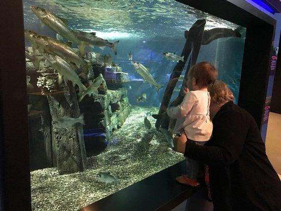 Aquarium of Niagara Image