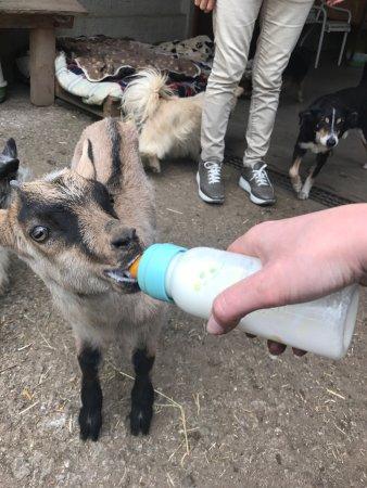 Brissago-Valtravaglia, Italy: Rifugio Animali Felici Onlus