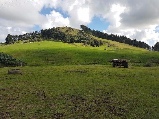 Tuakau, Neuseeland: Seriously - have you seen anything more beautiful?