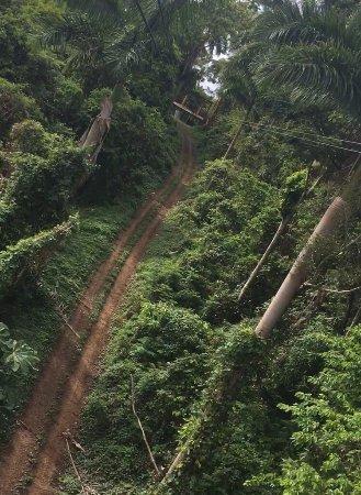 Rain Forest Zipline Corp.: photo1.jpg
