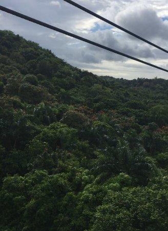 Rain Forest Zipline Corp.: photo2.jpg