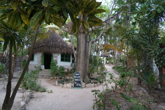 Dos Ceibas Eco Retreat: sand pathway to the restaurant and beach