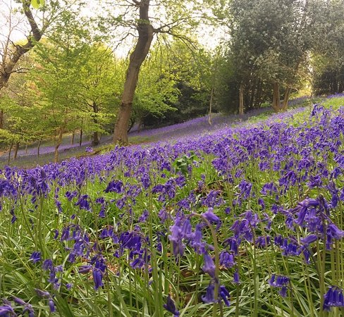Picturesque Bluebells In The Woods At Emmetts Garden May   Picture Of  With Handsome Emmetts Garden Photojpg With Alluring Landscaping For Small Gardens Also Gardening In A Raised Bed In Addition Garden Trolley Wheels And Garth Gardeners As Well As Lealans Garden Centre Additionally Mr Crowes Garden From Tripadvisorcouk With   Handsome Bluebells In The Woods At Emmetts Garden May   Picture Of  With Alluring Emmetts Garden Photojpg And Picturesque Landscaping For Small Gardens Also Gardening In A Raised Bed In Addition Garden Trolley Wheels From Tripadvisorcouk