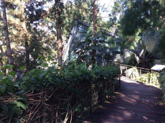 Photo de jardin botanique de singapour for Au jardin les amis singapore botanic gardens