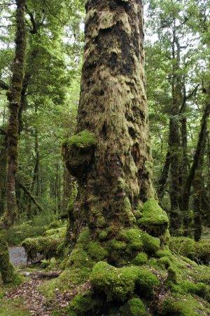 DOC Cascade Creek Campsite: from the nature walk