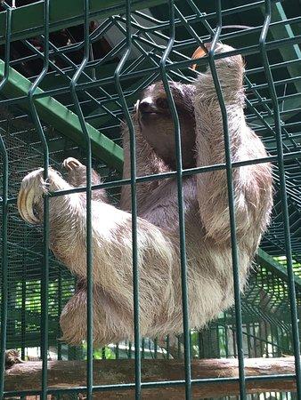 Sloth Sanctuary of Costa Rica: photo2.jpg