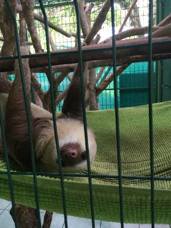 Sloth Sanctuary of Costa Rica: photo3.jpg