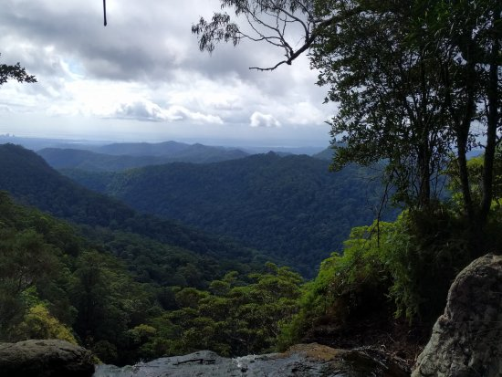 Springbrook National Park: view from the walking track