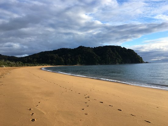 Totaranui Campground: lovely morning beach!