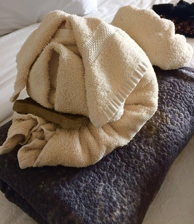 456 Embarcadero Inn & Suites: The towel dog with the bone.