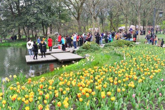 prince bay park crowds meandering around the tulip fields - Tulip Garden Near Me