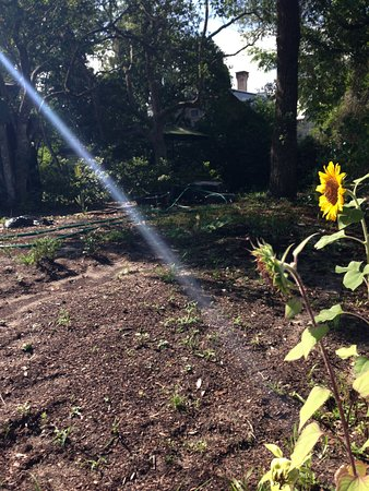 Cassadaga, FL: The Spiritualist Sunflower.