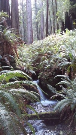 Redwood National Park : On Rhododendron Trail, Prairie Creek Park