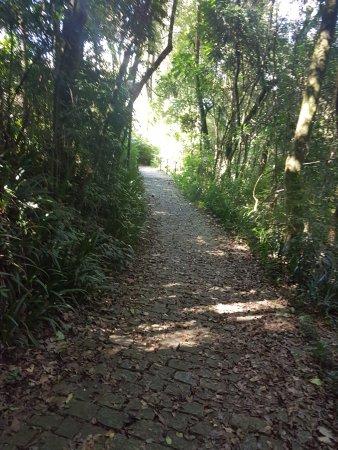 Deutscher Wald / Bosque Alemao : Trilha com a historia de João e Maria