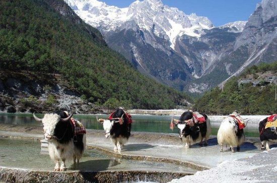 Private Day Trip to Yak Meadow at...