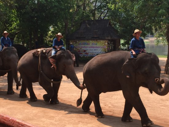 Thai Elephant Conservation Center: The two small elephants walking out to the show