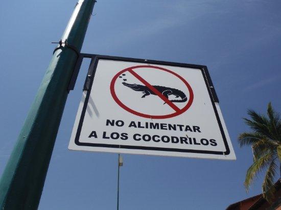Marina Vallarta: DON'T FEED THE CROCODILES