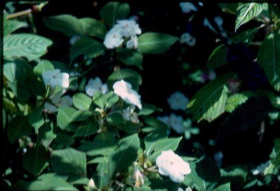 Reserva Curi-Cancha: plant life