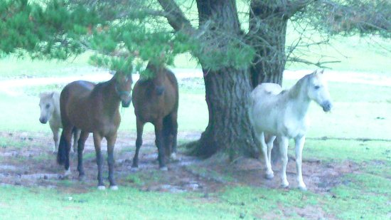 Morvern Valley Guesthouses: HORSES