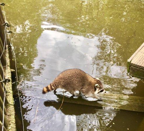 Naturschutz Tierpark Gorlitz