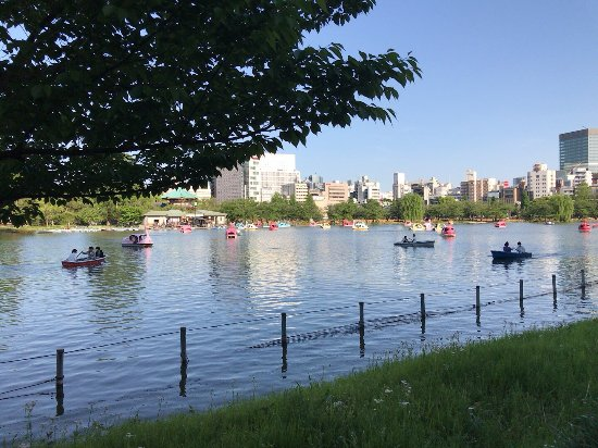 Shinobazu Pond: photo1.jpg