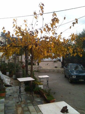 Ντουνιάς: the front yard in December
