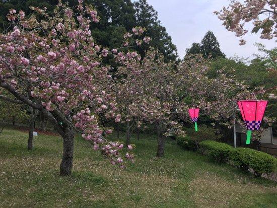 Naka, Japan: photo1.jpg