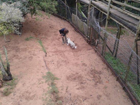Seaview Lion Park: White Tiger