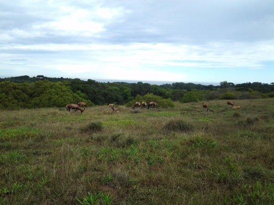 Seaview Lion Park: Bokke