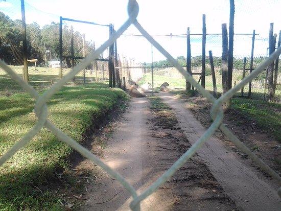 Seaview Lion Park: Lion section closed off