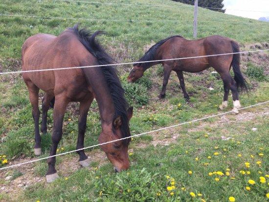 Cremeno, Italy: cavalli in agriturismo