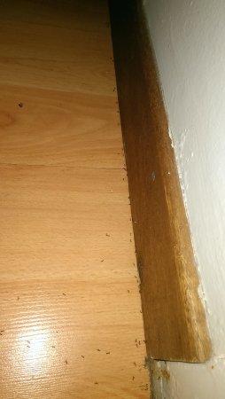 Villa Moringa Guesthouse: Ameisen im Zimmer