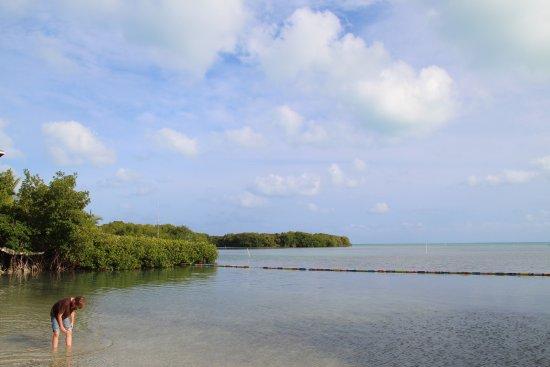 Conch Key, FL: Plage